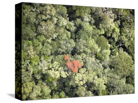 Remnant Forest in Mindongy du Sud National Park, Se Madagascar-Michael Fay-Stretched Canvas Print
