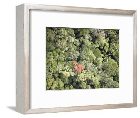 Remnant Forest in Mindongy du Sud National Park, Se Madagascar-Michael Fay-Framed Art Print