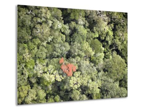 Remnant Forest in Mindongy du Sud National Park, Se Madagascar-Michael Fay-Metal Print