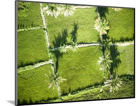 Oil Palm and Rice Cultivation Along the Edge of Lake Tanganyika, Tanzania-Michael Fay-Mounted Photographic Print