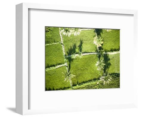 Oil Palm and Rice Cultivation Along the Edge of Lake Tanganyika, Tanzania-Michael Fay-Framed Art Print