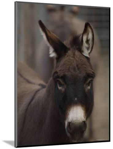 Miniature Donkey at the Riverside Zoo-Joel Sartore-Mounted Photographic Print