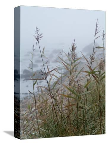 Looking Through Sea Grass to a Rocky Beach in the Fog, Block Island, Rhode Island-Todd Gipstein-Stretched Canvas Print