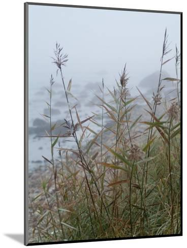 Looking Through Sea Grass to a Rocky Beach in the Fog, Block Island, Rhode Island-Todd Gipstein-Mounted Photographic Print