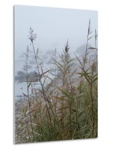 Looking Through Sea Grass to a Rocky Beach in the Fog, Block Island, Rhode Island-Todd Gipstein-Metal Print