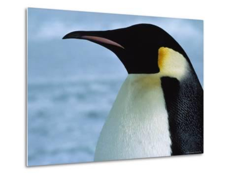 Portrait of an Emperor Penguin in Profile-Bill Curtsinger-Metal Print