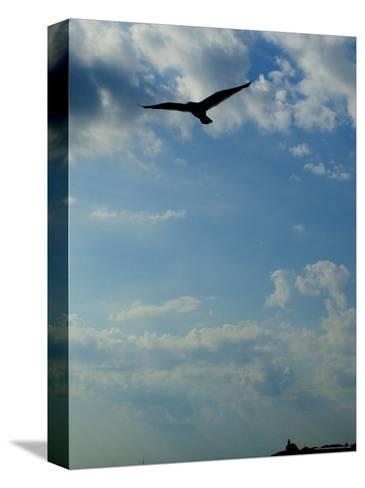 Seagull Soars over Long Island Sound and Plum Island Light-Todd Gipstein-Stretched Canvas Print