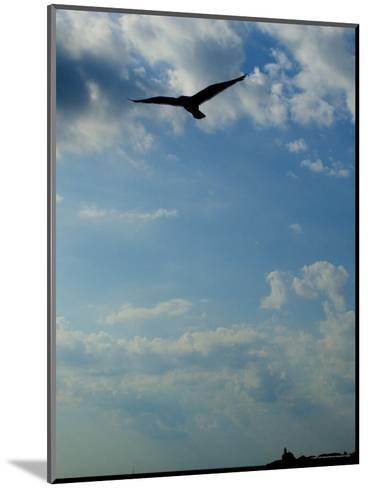 Seagull Soars over Long Island Sound and Plum Island Light-Todd Gipstein-Mounted Photographic Print