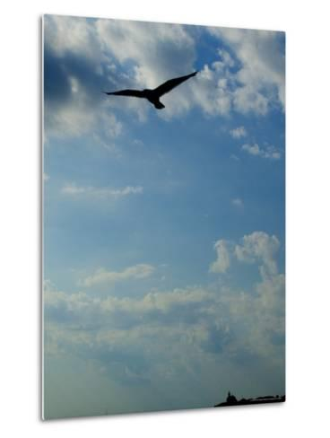 Seagull Soars over Long Island Sound and Plum Island Light-Todd Gipstein-Metal Print