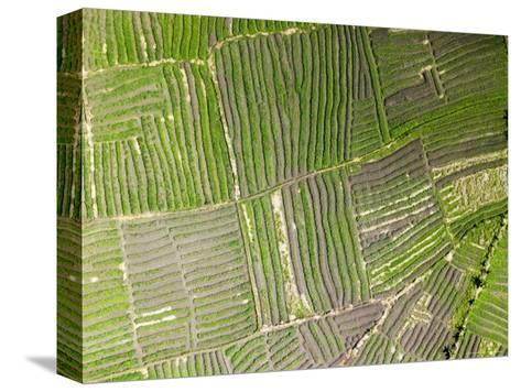 Vegetable Gardens Along the Floodplain Just Outside of Beira, Mozambique-Michael Fay-Stretched Canvas Print