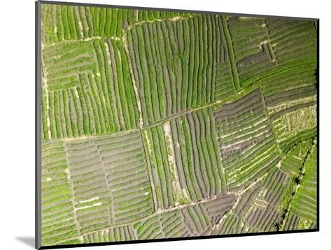 Vegetable Gardens Along the Floodplain Just Outside of Beira, Mozambique-Michael Fay-Mounted Photographic Print