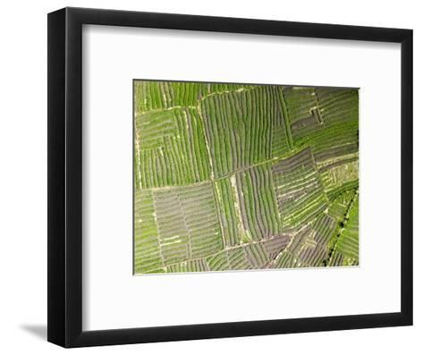 Vegetable Gardens Along the Floodplain Just Outside of Beira, Mozambique-Michael Fay-Framed Art Print