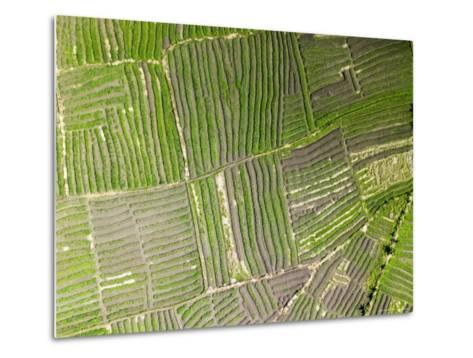 Vegetable Gardens Along the Floodplain Just Outside of Beira, Mozambique-Michael Fay-Metal Print