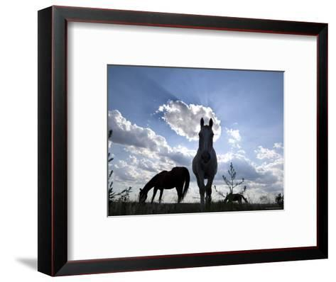 The Sun Shines Through Clouds on Some Horses in Burwell, Nebraska-Joel Sartore-Framed Art Print