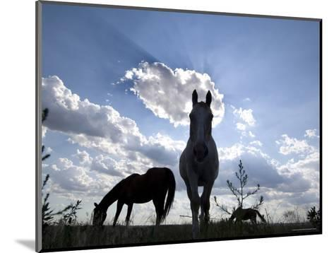 The Sun Shines Through Clouds on Some Horses in Burwell, Nebraska-Joel Sartore-Mounted Photographic Print