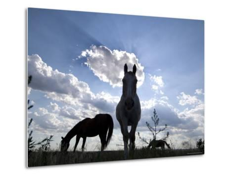 The Sun Shines Through Clouds on Some Horses in Burwell, Nebraska-Joel Sartore-Metal Print