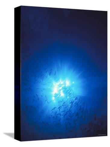 Silhouette with Sun Burst Light Rays in Blue Water, Solomon Islands-James Forte-Stretched Canvas Print