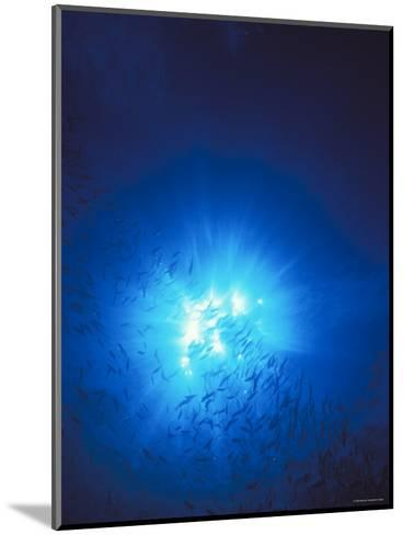 Silhouette with Sun Burst Light Rays in Blue Water, Solomon Islands-James Forte-Mounted Photographic Print