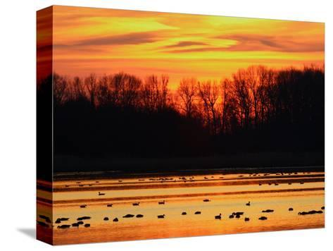 Scene at Bombay Hook National Wildlife Refuge, Delaware-George Grall-Stretched Canvas Print