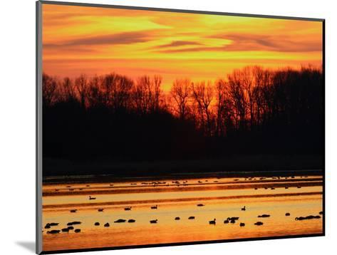 Scene at Bombay Hook National Wildlife Refuge, Delaware-George Grall-Mounted Photographic Print