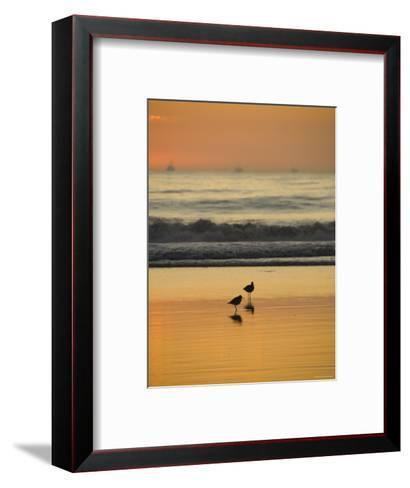 Two Sea Birds Standing in the Surf at Sunset, California-James Forte-Framed Art Print