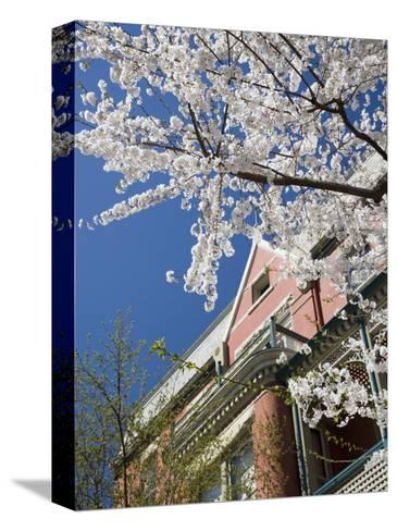 Springtime Flowering Tree against Old Brick Home and Blue Sky-David Evans-Stretched Canvas Print