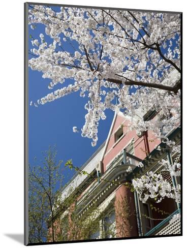 Springtime Flowering Tree against Old Brick Home and Blue Sky-David Evans-Mounted Photographic Print