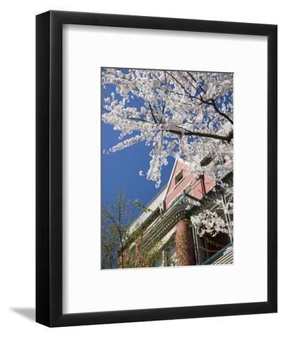 Springtime Flowering Tree against Old Brick Home and Blue Sky-David Evans-Framed Art Print
