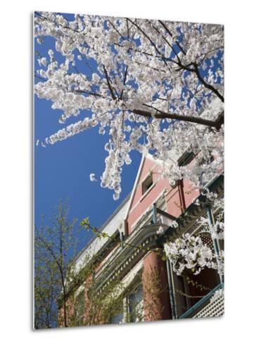 Springtime Flowering Tree against Old Brick Home and Blue Sky-David Evans-Metal Print