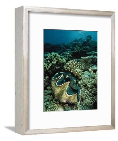 Underwater Vista of a Reef Off Bikini Atoll Reveals a Giant Clam and Various Corals-Bill Curtsinger-Framed Art Print