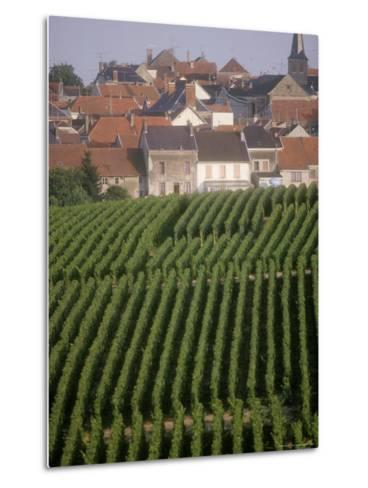 Vineyards in the Champagne Region, France-Michael S^ Lewis-Metal Print