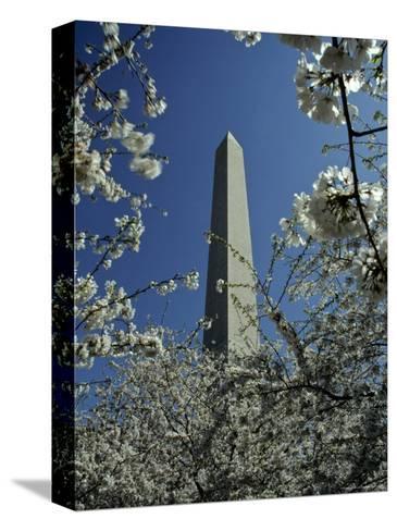 Washington Monument Seen Through Cherry Blossom Trees, Washington, D.C.-Kenneth Garrett-Stretched Canvas Print