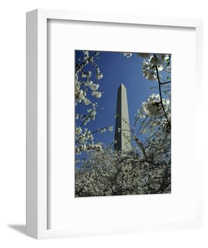 Washington Monument Seen Through Cherry Blossom Trees, Washington, D.C.-Kenneth Garrett-Framed Art Print