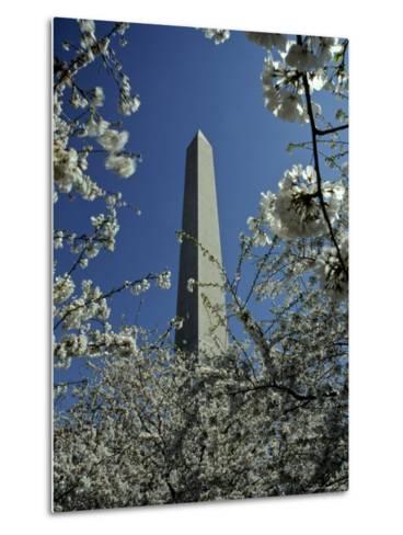 Washington Monument Seen Through Cherry Blossom Trees, Washington, D.C.-Kenneth Garrett-Metal Print