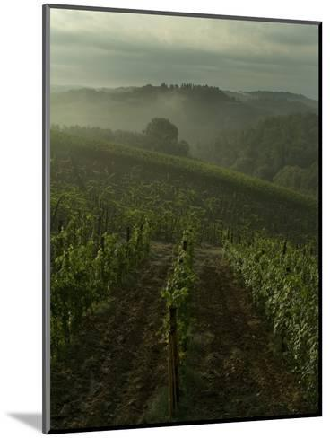 Vineyards Along the Chianti Hillside Through the Fog, Tuscany, Italy-Todd Gipstein-Mounted Photographic Print