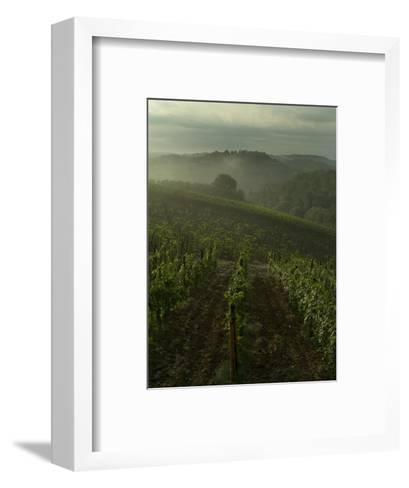 Vineyards Along the Chianti Hillside Through the Fog, Tuscany, Italy-Todd Gipstein-Framed Art Print