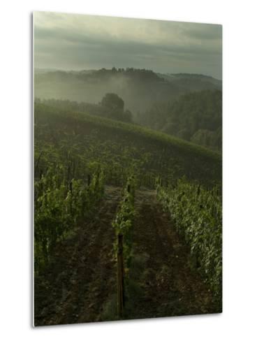 Vineyards Along the Chianti Hillside Through the Fog, Tuscany, Italy-Todd Gipstein-Metal Print