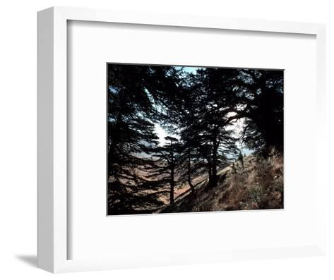 View Through the Branches of Lebanon's Famous Cedar Trees-Ira Block-Framed Art Print