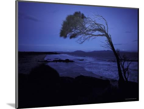 Windswept Scraggly Coastal Tree after Sunset on a Stormy Night, Australia-Jason Edwards-Mounted Photographic Print