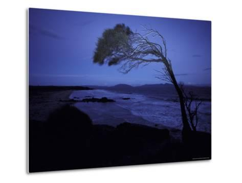 Windswept Scraggly Coastal Tree after Sunset on a Stormy Night, Australia-Jason Edwards-Metal Print
