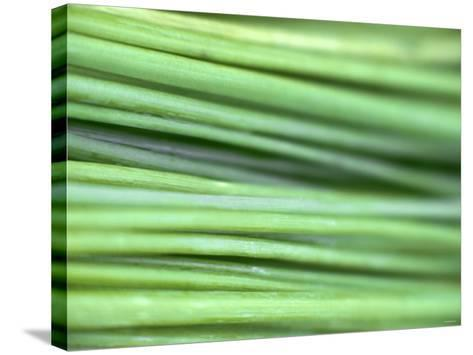 Chives-Ulrike Holsten-Stretched Canvas Print