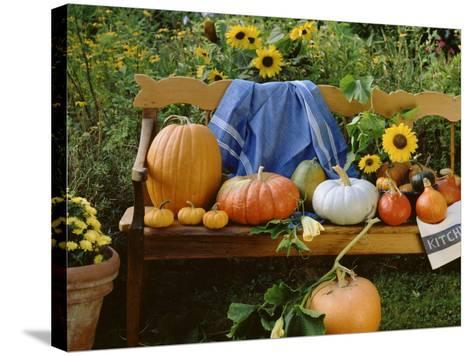 Pumpkin Still Life on Wooden Bench in Country Garden--Stretched Canvas Print