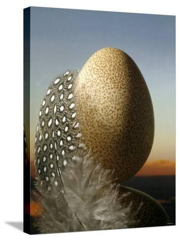 A Guinea Fowl Egg and Feather-Manfred Seelow-Stretched Canvas Print