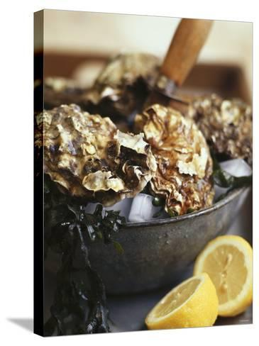 Fresh Oysters and Lemon-Debi Treloar-Stretched Canvas Print