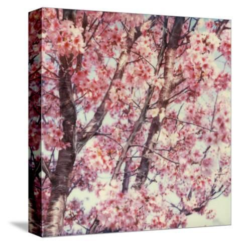 Cherry Tree-Claire Rydell-Stretched Canvas Print