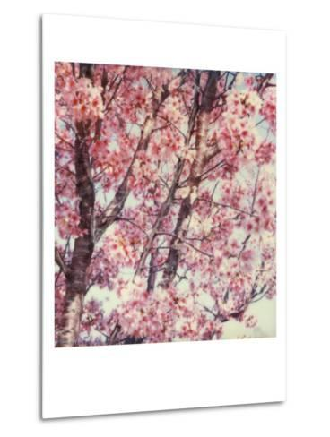 Cherry Tree-Claire Rydell-Metal Print