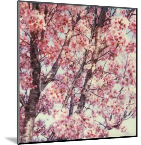 Cherry Tree-Claire Rydell-Mounted Giclee Print