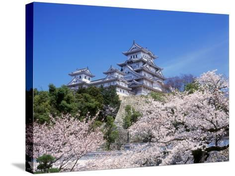 Cherry Blossoms and Himeji Castle--Stretched Canvas Print
