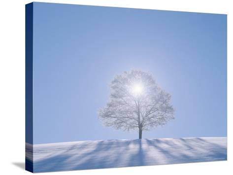A Tree in the Snow Field--Stretched Canvas Print
