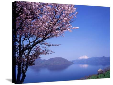 Cherry Blossoms and Lake Toyah--Stretched Canvas Print